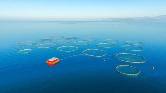 Su ürünleri ihracatında rekor kırıldı!