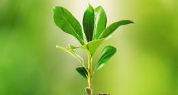 Bilim insanları, bitkilerle iletişim kurmanın yolunu buldu