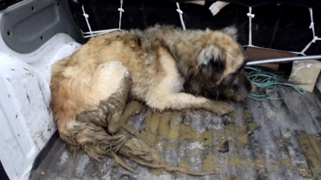 Samsun'da dere kenarında 20 gün mahsur kalan köpek kurtarıldı