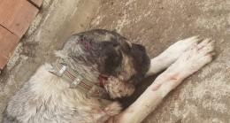 Samsun'da kendisine saldıran köpeği baltayla yaraladı
