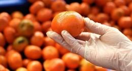 Turunçgilde 5 aylık ihracat yüzde 12 arttı