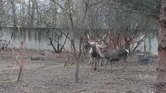 Zonguldak'ta hayvanat bahçesindeki geyiği kaçırıp yiyen 2 kişi tutuklandı