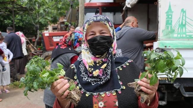 İzmit köylülerine 144 bin hibe fide